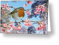 Robin On Winter Flowering Plum Greeting Card