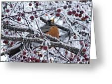 Robin Perched In Crabapple Tree Greeting Card