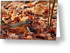 Robin Playing In Fallen Leaves Greeting Card