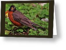 Robin Portrait Greeting Card