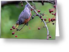Robin Reaching For Berry Greeting Card