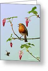 Robin Singing On Flowering Currant Greeting Card