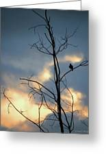 Robin Watching Sunset After The Storm Greeting Card