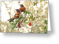 Robins In Holly Greeting Card