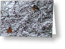 Robins In The Snow Greeting Card