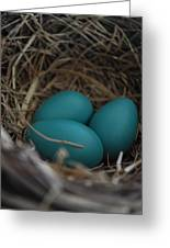 Robins Nest Greeting Card