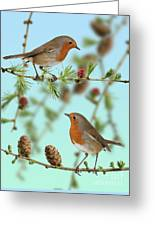 Robins On Larch Greeting Card