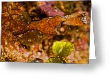 Robust Ghost Pipefish Greeting Card