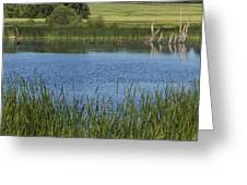 Rochester Wildlife Pond 1 Greeting Card