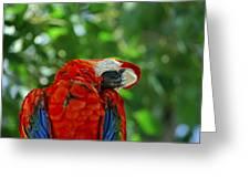 Rock A Bye Birdie Greeting Card
