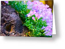 Rock And Flowers Greeting Card