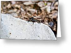 Rock And Robber Fly Greeting Card