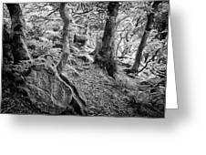 Rock And Trees Greeting Card