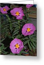 Rock Rose Orchid Greeting Card