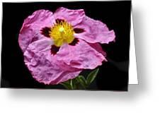 Rock Rose Greeting Card