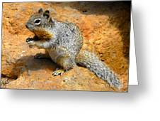Rock Squirrel Greeting Card