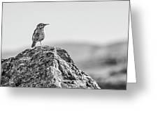 Rock Wren 2bw Greeting Card