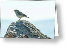 Rock Wren  Greeting Card