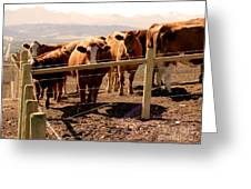 Rockies Cattle Country Greeting Card