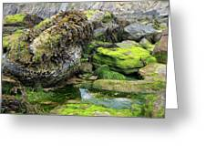 Rockpool Greeting Card