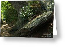 Rocks And Rhododendron At Chimney Rock Greeting Card