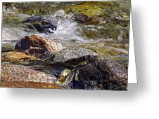 Rocks In A Stream 2a Greeting Card