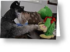 Rocky And The Frog Greeting Card