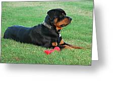 Rottweiler Portrait Greeting Card