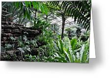 Rocky Fern Room Greeting Card