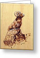 Rocky Mountain Bighorn Sheep Greeting Card
