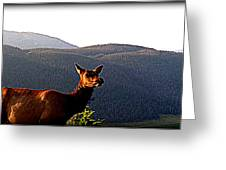 Rocky Mountain Elk Vi Greeting Card