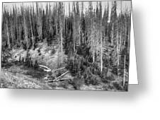 Rocky Mountain High Elevation Forest Large Panorama Greeting Card