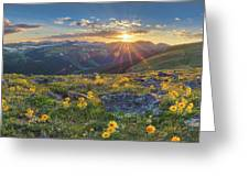 Rocky Mountain National Park Summer Sunflowers Pano 1 Greeting Card