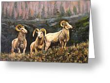 Rocky Mountain Sheep Greeting Card
