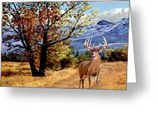 Rocky Mountain Trail Greeting Card