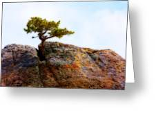 Rocky Mountain Tree Greeting Card