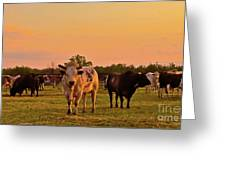Rodeo Bulls At Dawn Greeting Card by Gus McCrea