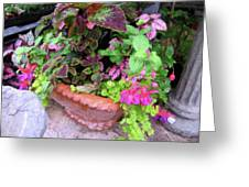 Roger's Gardens Begonia Greeting Card