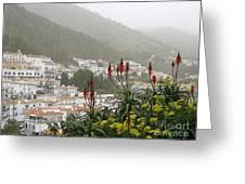 Rojo In The Pueblos Blancos Greeting Card
