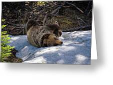Roll In The Snow Greeting Card