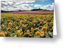 Rolling Hills Of Flowers In Summer Greeting Card