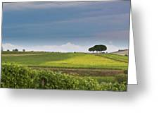 Rolling Tuscany 2 Greeting Card by Patrick English