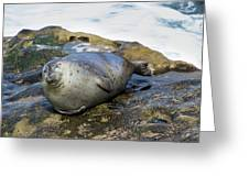 Roly Poly Seal Greeting Card