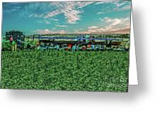 Romaine Lettuce Harvest Greeting Card