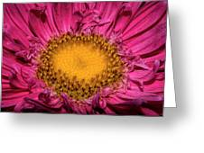 Romance Of Yellow And Shocking Pink Greeting Card