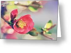Romancing Spring II Greeting Card