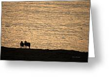 Romancing The Sheep Greeting Card