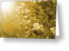 Romantic Blossoms With Bokeh Greeting Card