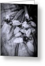 Romantic Island Iris In Black And White Greeting Card
