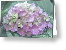 Romantic Pink Hydrangea Greeting Card